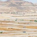 """""""العقاري"""": صرف القرض دفعة واحدة للمستفيدين الذين تزيد أسعار أراضيهم عن 500 ألف ريال"""