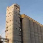 مؤسسة الحبوب تعلن جاهزيتها لبدء موسم استلام كميات القمح المحلي للموسم الثاني