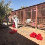 تسجيل ثلاث إصابات جديدة بإنفلونزا الطيور H5N8