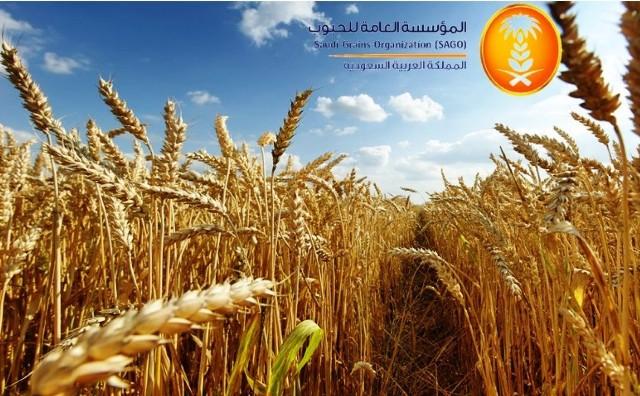 """""""مؤسسة الحبوب"""" تبدأ بصرف مستحقات الدفعة الثانية لمزارعي القمح المحلي لهذا الموسم"""
