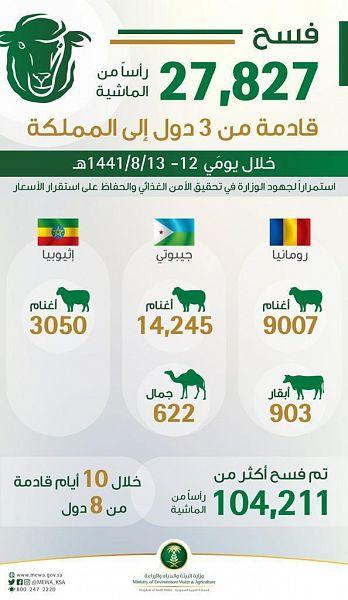 """""""البيئة"""": 27,827 رأسًا من المواشي تصل من رومانيا وإثيوبيا وجيبوتي إلى المملكة"""
