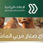 """""""البيئة"""": صرف مبالغ الدورة الـ15 لدعم قطاع صغار مربي الماشية بأكثر من 118 مليون ريال"""