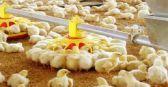 البيئة تحظر استيراد الطيور من ماليزيا وأمريكا بسبب الانفلونزا